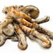 Fresh Octopus — Stock Photo #42596911