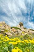 Spring in Gallura — Stock Photo