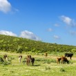 Sardinia, Gerrei landscape — Stock Photo #47644427