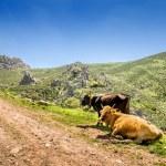 Sardinia, Gerrei landscape — Stock Photo #47646731