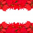 Christmas frame from red poinsettias — Stock Photo