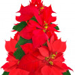 Christmas tree made of poinsettia flowers — Stock Photo #37463339