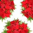 Red poinsettia flower with beautiful christmas tree branch — Stock Photo