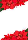 Noel çerçevelemek--dan poinsettias — Stok fotoğraf