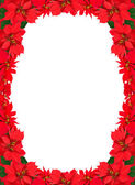 Christmas frame from red poinsettias — Stok fotoğraf