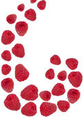 Many red raspberries — Stock Photo
