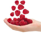 Ripe raspberries in a palm — Stock Photo