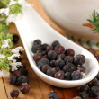 Juniper berries - Stock Photo