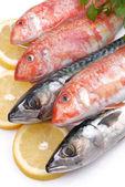 Mullets and mackerels — Stock Photo