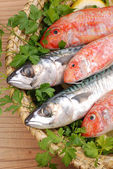 Mullets and mackerels — Stock Photo