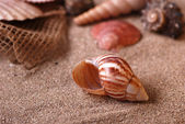 Shells on the beach — Stockfoto