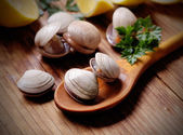 Clams on the wooden table — Stock Photo