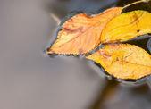 水の明るい秋の紅葉 — ストック写真