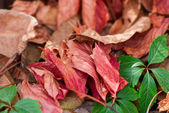 Avant avis des feuilles jaunes sur la terre — Photo