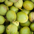 Background green walnuts — ストック写真 #13933962