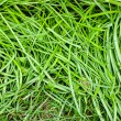 Green grass surface — Stock Photo