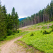 Stock Photo: Path in pine forest