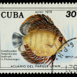 CUBA - CIRCA 1978: A stamp printed in Cuba shows fish Symphysodon Aequifasciata Axelrodi, circa 1978 - Stock Photo
