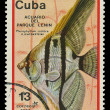 CUB- CIRC1977: stamp printed in Cubshows fish Pterophyllum scalare , circ1977 — Stock Photo #20843259