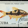 CUBA-CIRC1978: stamp printed in Cubshows fish Barbus Arulios, circ1978 — Stock Photo #20843289