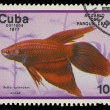 CUBA-CIRC1977: stamp printed in Cubshows fish Beltsplendens, circ1977 — Stock Photo #20843353