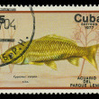 CUBA-CIRC1977: stamp printed in Cubshows fish Cyprinus caprio, circ1977 — Stock Photo #20843419