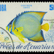 CUBA-CIRC1985: stamp printed in Cubshows fish Holacanthus ciliaris, circ1985 — Stock Photo #20843509