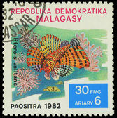 MALAGASY - CIRCA 1982:Stamp shows image of a Pterois volitans, c — Stock fotografie