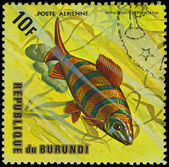 Republic of Burundi, - CIRCA 1975: A stamp printed by Burundi shows the fish Distichodus sexfasciatus, circa 1975 — Foto Stock