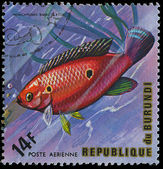 Republic of Burundi, - CIRCA 1975: A stamp printed by Burundi shows the fish Hemichromis bimaculatus, circa 1975 — Stock Photo