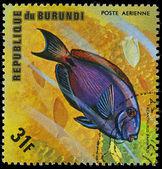 República de burundi, - alrededor de 1975: un sello impreso por burundi sh — Foto de Stock