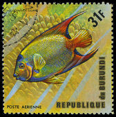 Republic of Burundi, - CIRCA 1975: A stamp printed by Burundi shows the fish Holocanthus ciliaris, circa 1975 — Stock Photo