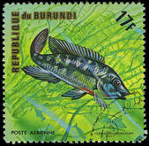 Republic of Burundi, - CIRCA 1975: A stamp printed by Burundi shows the fish Tilapia melanopleura, circa 1975 — Stock Photo