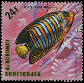 Republic of Burundi, - CIRCA 1975: A stamp printed by Burundi shows the fish Pygoplites diacanthus, circa 1975 — Stock Photo