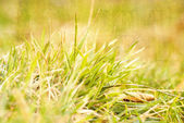 Background of green grass, artwork in painting style — Stock Photo