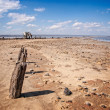 Littered the drying lake shore — Stockfoto