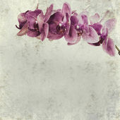Textured old paper background with magenta phalaenopsis orchid — Stock Photo