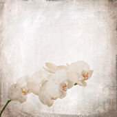 Textured old paper background with white and magenta phalaenopsis orchid — Stock Photo