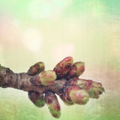 Textured old paper background with spring blossoming tree buds — Stock Photo