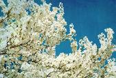 Spring flowering tree on blue textured sky — Stock Photo