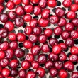 Seamless texture of cherries — Stock Photo