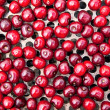 Stock Photo: Seamless texture of cherries