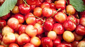 Seamless texture of sweet cherries — Stockfoto