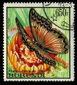 бурунди - около 1973: марку, напечатанную в бурунди показывает cymothoe бабочка, около 1973 — Стоковое фото