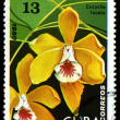 Stock Photo: CUB- CIRC1980: stamp printed in Cubshows Brown Veined Encyclia, EncycliFucata, Orchid, circ1980