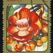 CUBA - CIRCA 1984: post stamp printed in Cuba shows image of couroupita guianensis (cannonball tree) from Caribbean flowers series, Scott catalog 2688 A730 2c, circa 1984 — Stock Photo