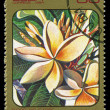 CUBA - CIRCA 1984: post stamp printed in Cuba shows image of plumeria alba (plumieria) from Caribbean flowers series, Scott catalog 2691 A730 30c, circa 1984 — Stock Photo