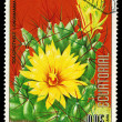 EQUATORIAL GUINE- CIRC1974: stamp printed in Equatorial Guineshows Dolichothele Longimamma, series is devoted to flowers, circ1974 — 图库照片 #29056281