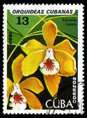 CUBA - CIRCA 1980: a stamp printed in the Cuba shows Brown Veined Encyclia, Encyclia Fucata, Orchid, circa 1980 — Stock Photo