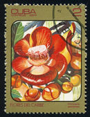 Cuba - circa 1984: sello de correos impreso en cuba muestra imagen de couroupita guianensis (árbol del cannonball) de flores del caribe serie, scott catálogo 2688 a730 2c, circa 1984 — Foto de Stock